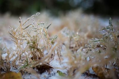 Ice storm-1