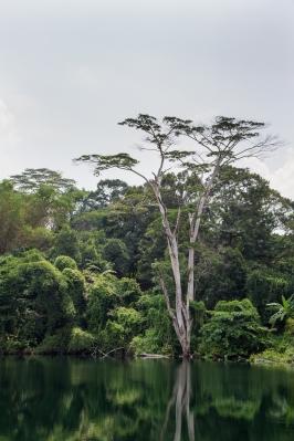 Singapore 2014-16