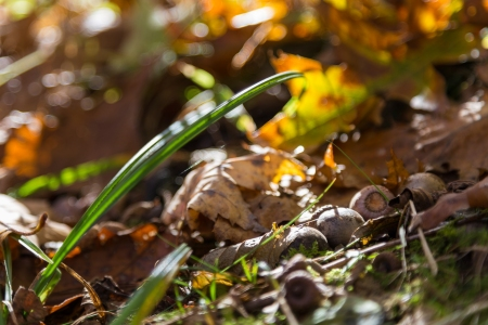Last autumn-4
